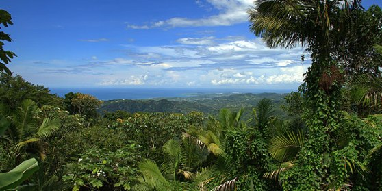El-Yunque-Rainforest_1
