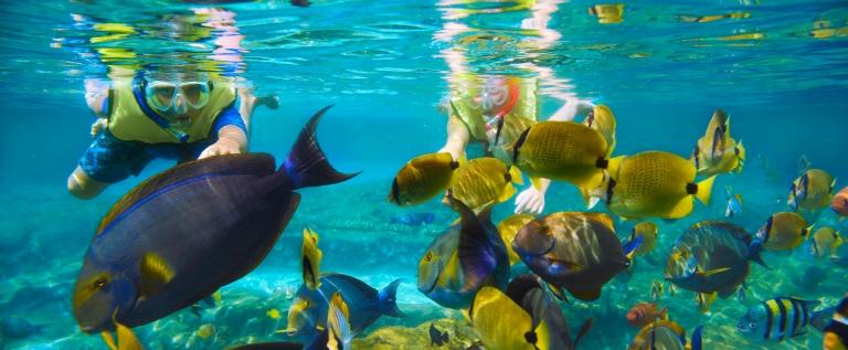 snorkeling-fish